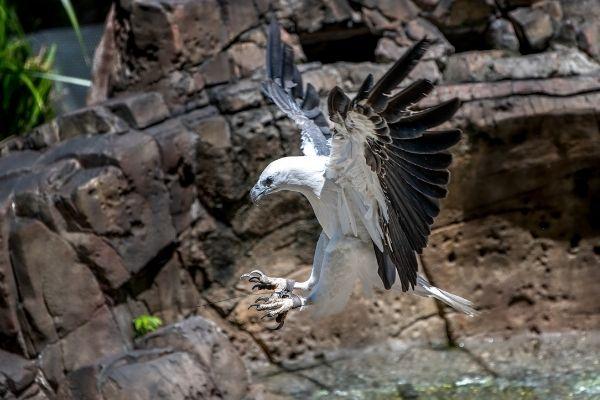 izmir wildlife park